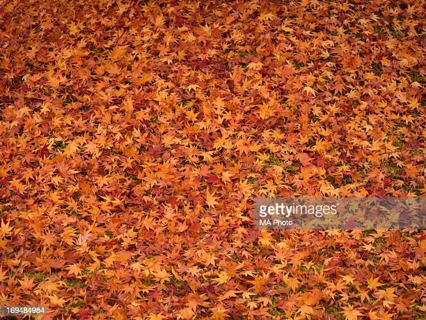 Maple Leaves Carpet