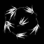 arrangement five autumnal lace leaf japanese