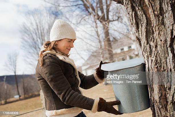 のメープルシロップファームます。若い女性のバケットを