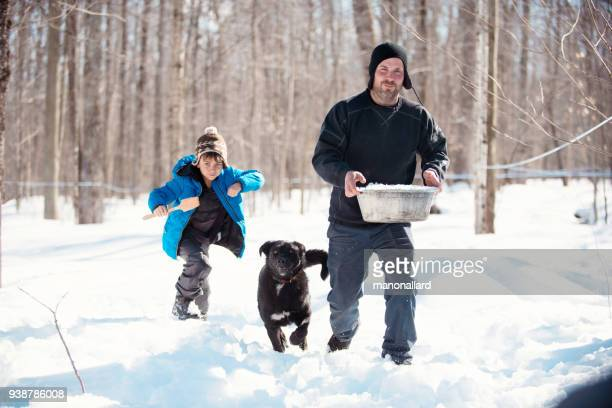 maple syrup industry time with father and son bringing snow for tasting maple syrup - maple tree stock pictures, royalty-free photos & images