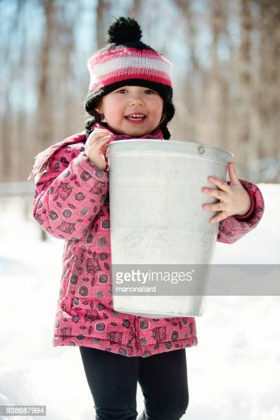 Sugar Maple Stock Photos And Pictures Getty Images