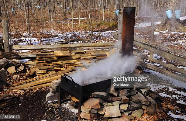 maple syrup making - maple sugaring stock photos and pictures