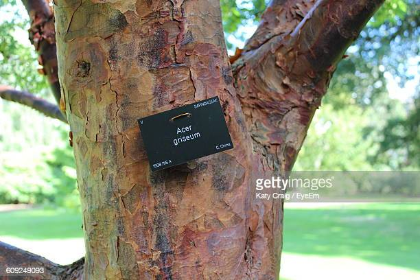 Maple Tree With Text On Placard In Park