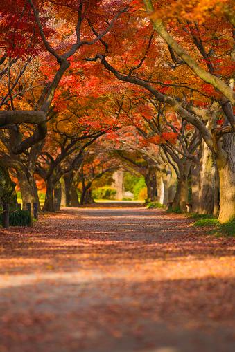 Maple tree's arch - gettyimageskorea