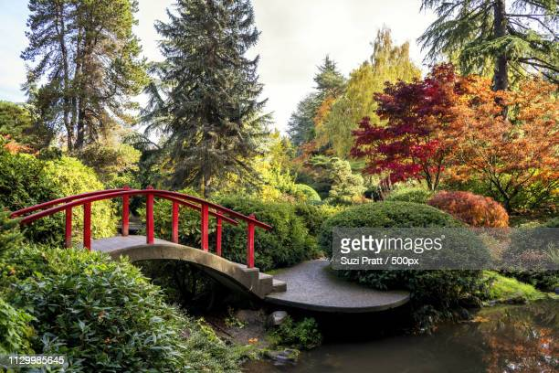 Maple Trees In Kubota Garden, Washington