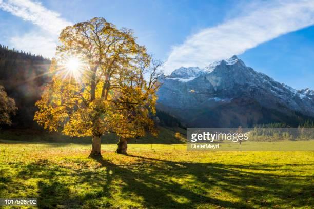maple valley in österreichische alpen - naturschutzgebiet großer ahornboden - laubbaum stock-fotos und bilder
