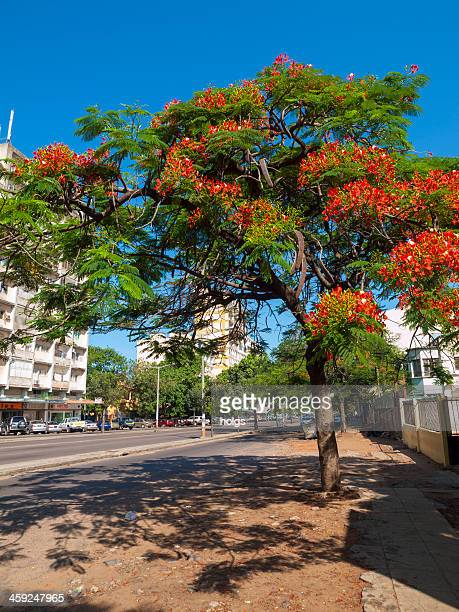 maputo, mozambique - maputo city stock pictures, royalty-free photos & images