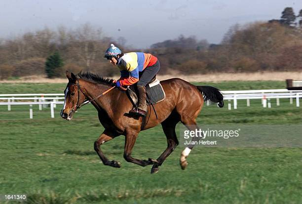 Florida Pearl the current favourate for Thursdays Gold Cup is put through a morning gallop by Jackie Mullins wife of the trainer Willie at Cheltenham...