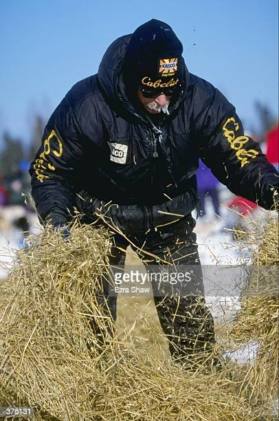 Jeff King lays down straw to make bedding for his team of dogs during the Iditarod Trail Race in Nikolai/Rohn Alaska Mandatory Credit Ezra O Shaw...