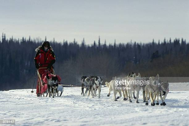 Jeff King mushes his dogs across the snow during the Iditarod Trail Race in Eagle Island Alaska Mandatory Credit Ezra O Shaw /Allsport