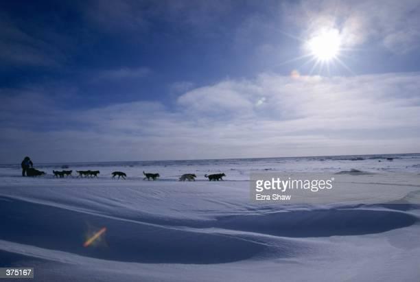 Vern Halter mushes his dogs during the Iditarod Trail Race in Alaska Mandatory Credit Ezra O Shaw /Allsport