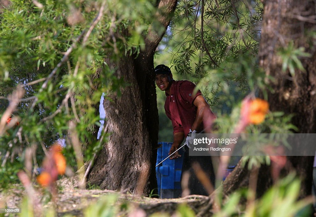 Tiger Woods of the United States plays from the trees on the 18th hole during the final round of the Dubai Desert Classic at the Emirates Golf Club, Dubai. Mandatory Credit: Andrew Redington/ALLSPORT