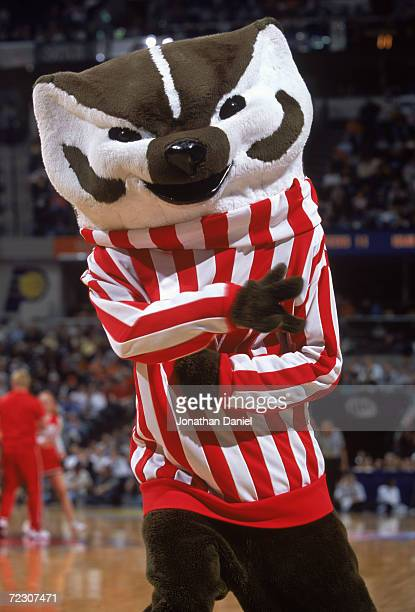 A view of the Wisconsin Badgers mascot as he dances on the court during the BIG 10 Tournament against the Iowa Hawkeyes at the Conseco Fieldhouse in...