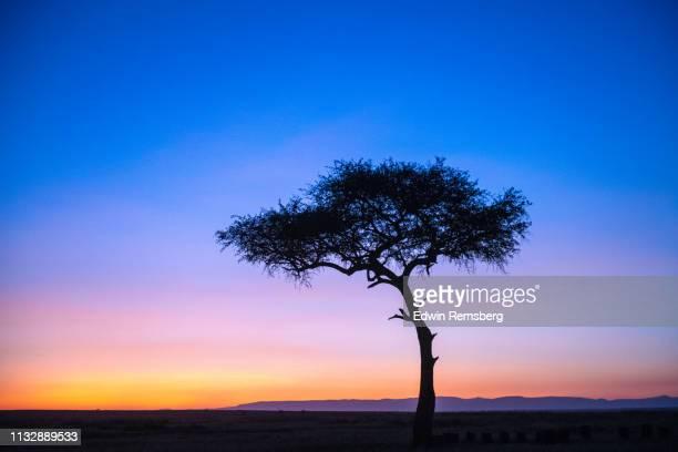 mara sunrise - cor saturada - fotografias e filmes do acervo