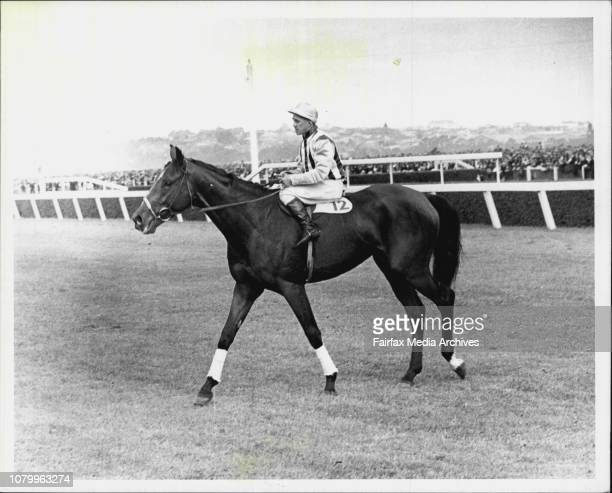 Marabou Pictured with Jockey K Voitre after winning the 1935 Melbourne Cup October 01 1979