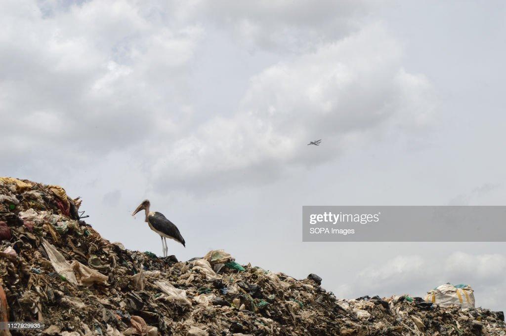 A marabou stork in Nairobi's Dandora dump site. Nairobi... : News Photo