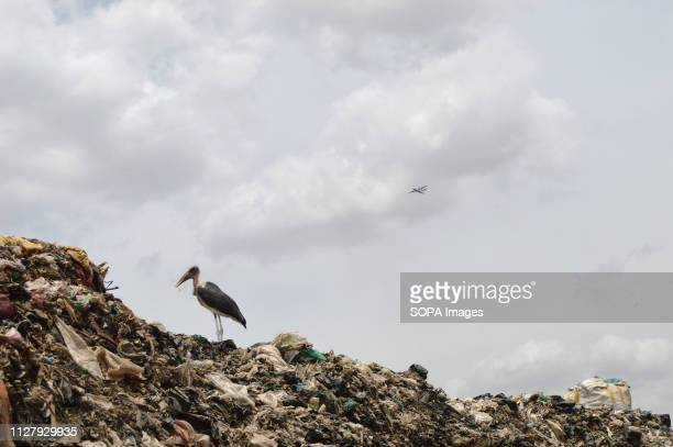 A marabou stork in Nairobi's Dandora dump site Nairobi generates an average of 3000 tons of solid waste every day from industries broken sewer lines...