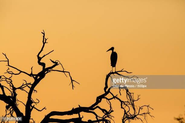 marabou sunset - marabout photos et images de collection