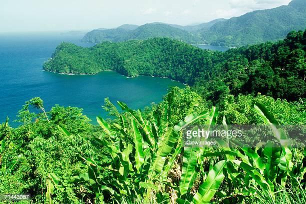 Maracas Bay is seen beyond a banana plantation, Trinidad, Caribbean