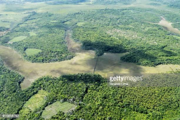 marajo island - río amazonas fotografías e imágenes de stock