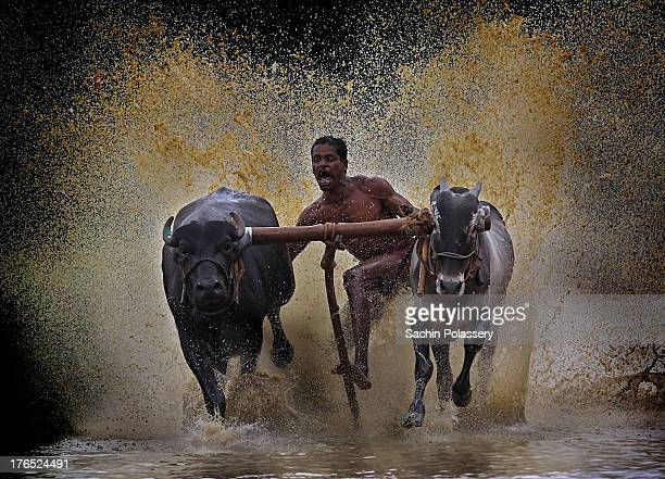 Maramadi or Bull race Locally known as Maramadi, Bullrace is a post harvesting festival of Kerala, India. Lot of people gather around a 100 metre...
