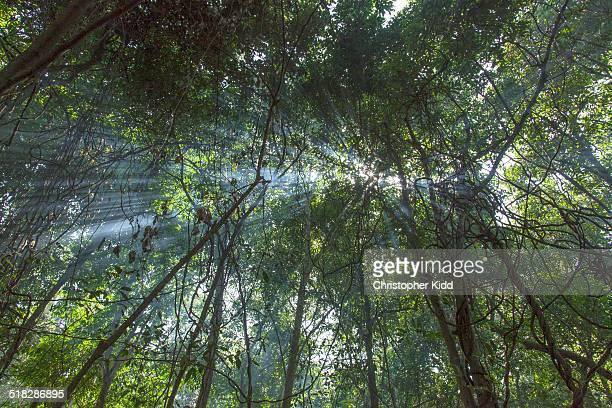 Maramagambo Forest, Uganda