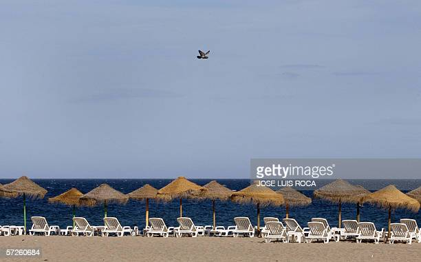 A pigeon flies over empty deckchairs on a beach in the well off resort of Marbella on Spain's Costa del Sol 05 April 2006 The Spanish government on...