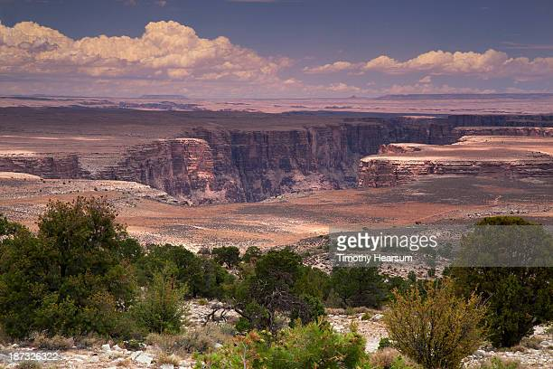marble canyon with trees in foreground, sky beyond - timothy hearsum stock photos and pictures