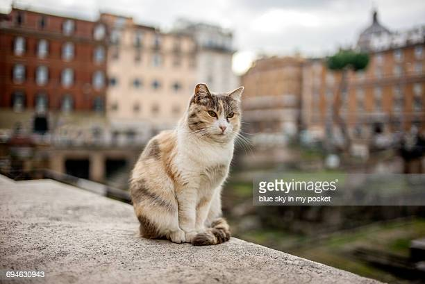 marble looking roman cat. - undomesticated cat stock pictures, royalty-free photos & images