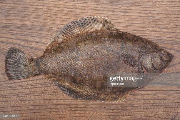 marbled flounder fish on wooden table - ippei naoi stock photos and pictures