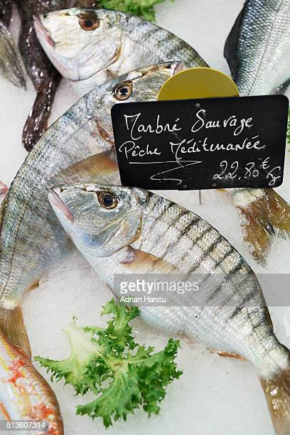 Marbre sauvage - sand steenbras or striped seabream (Lithognathus mormyrus) in ice for sale at traditional market in France