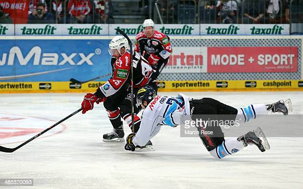 Marcel Mueller Koeln and Alexander Oblinger of Ingolstadt battle for the puck in game one of the DEL final playoffs between Koelner Haie and ERC...