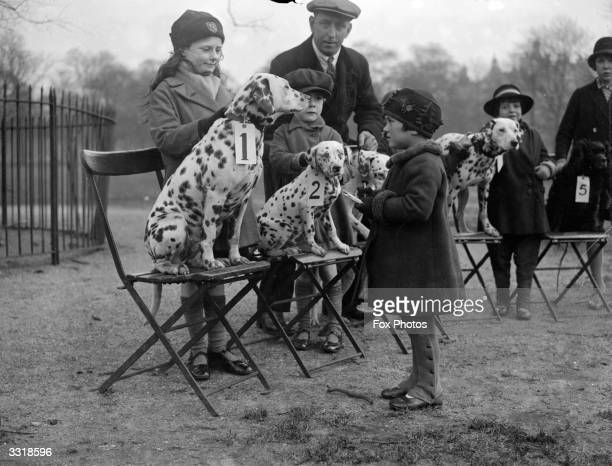 Winning dalmatians sit proudly on their chairs at a dog show in London's Hyde Park, watched admiringly by their young owners.