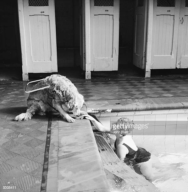 A blind woman relaxes at the local swimming pool watched over by her guide dog