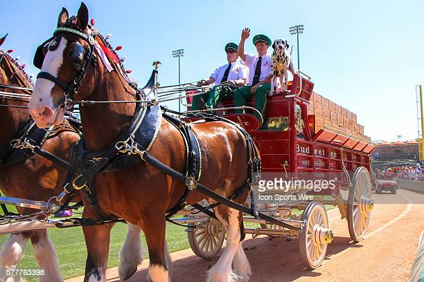 Budweiser clydesdale horses trot along the warning track prior to the Spring Training game between the Texas Rangers and Los Angeles Dodgers at...