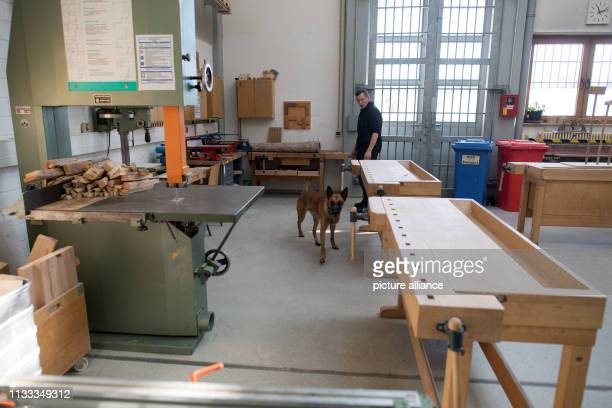 21 March 2019 North RhineWestphalia Köln A drug sniffer dog searches for drugs in a factory building of the prison in Cologne The judiciary in North...