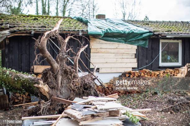 11 March 2019 North RhineWestphalia Mülheim an der Ruhr The storm damage to Andreas Kallweit's garden house has been provisionally repaired with...