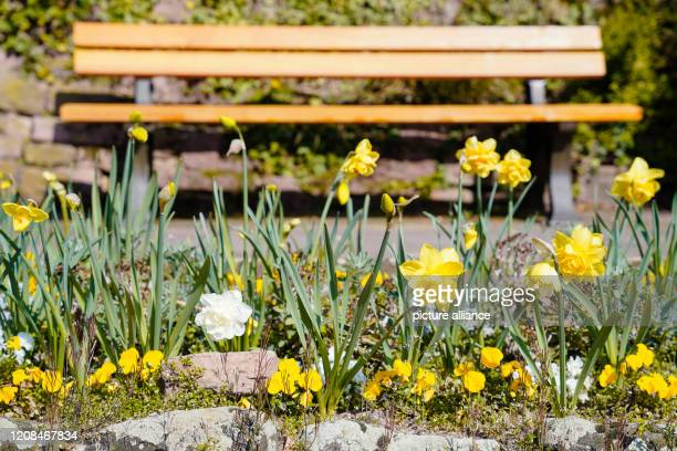 28 March 2020 BadenWuerttemberg Heidelberg Easter bells stand in front of an unoccupied park bench on Philosophenweg Due to the Corona crisis there...
