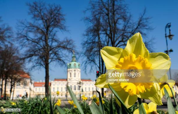 Easter bells bloom in front of Charlottenburg Palace in sunshine and blue skies Photo Jens Kalaene/dpaZentralbild/dpa