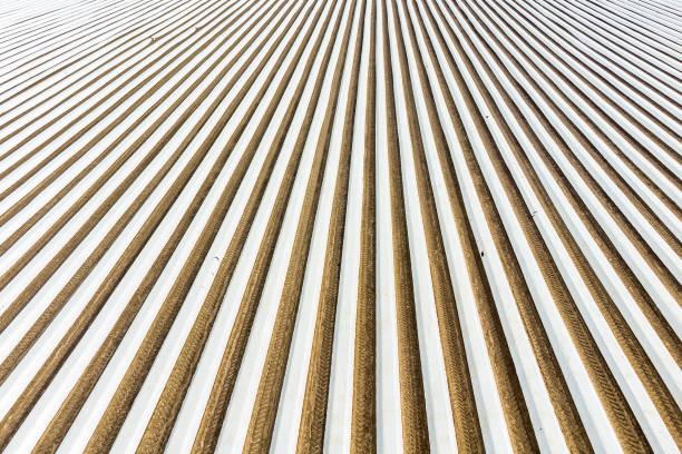 DEU: Asparagus Field In Upper Palatinate
