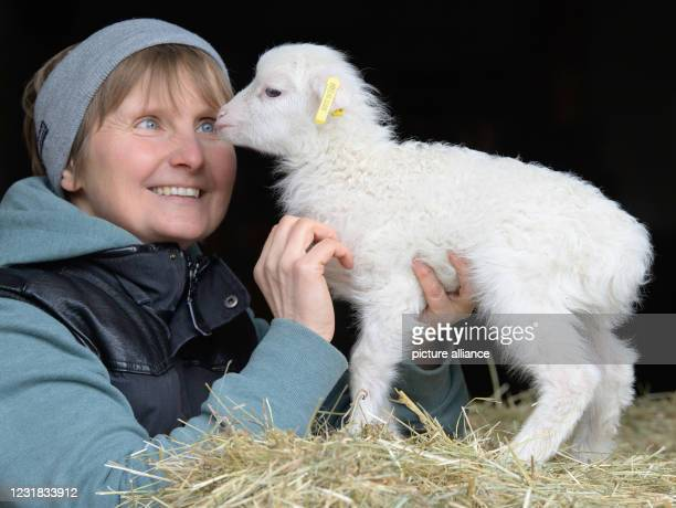 March 2021, Brandenburg, Roskow: Farmer Katja Behling from the Skuddenhof in the Roskow district of Weseram strokes Danika, a lamb born on . Together...