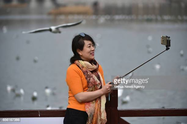 YINCHUAN March 21 2017 A tourist takes selfie with the blackheaded gulls by the Yange Lake in Yinchuan capital of northwest China's Ningxia Hui...