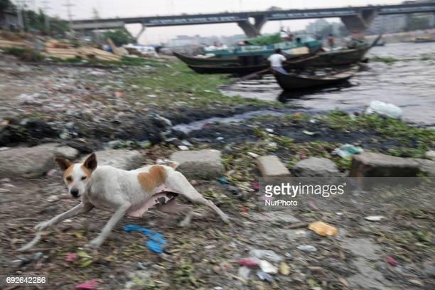March 22 2017 Dhaka Bangladesh A dog runs near the riverbank of Buriganga on the eve of World Environment Day in Dhaka Bangladesh 05 June 2017 A...