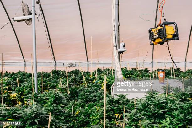 A stereo hangs above a locked camera box with a monitor that records everything happening in the two greenhouses at the Stanley brothers' grow...