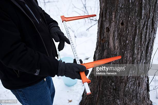 TORONTO ON March 4 Jim Aikenhead program instructor demonstrates the maple sap extracting process at the Mountsberg Conservation Area near...