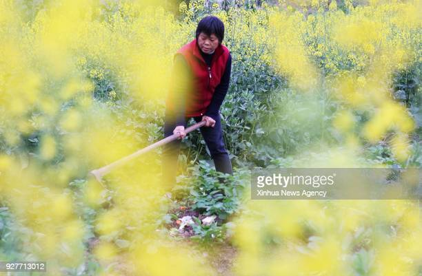 ZUNYI March 5 2017 A woman works in the field at Gongkuang Village in Chishui City southwest China's Guizhou Province March 5 2017 Sunday marks the...