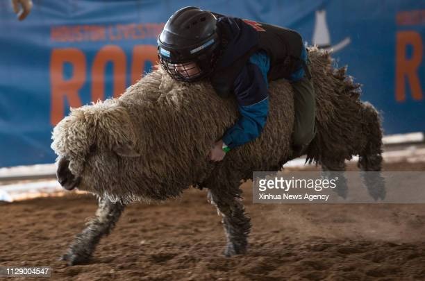 HOUSTON March 5 2019 A Mutton Bustin contestant holds onto a sheep during his ride at Houston Livestock Show and Rodeo in Houston Texas the United...