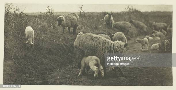 March Pastoral , circa 1883/87, printed 1888. A work made of photogravure, pl. Xii from the album 'pictures of east anglian life' . Artist Peter...