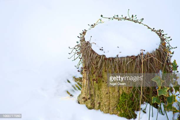 march snow - nigel owen stock pictures, royalty-free photos & images