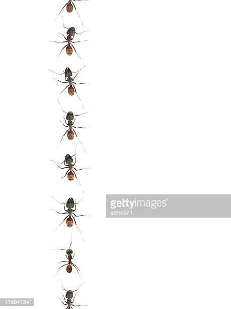 marching ants 01 - pest stock photos and pictures